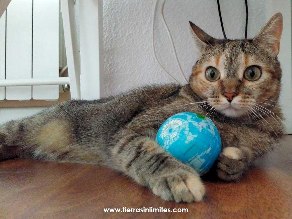 gato bola mundo