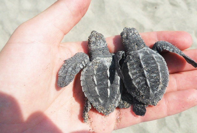 Tortugas Kowabunga Ecoproject