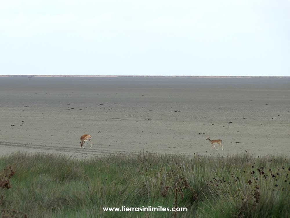 Las marismas de Doñana secas con la vera en primer plano