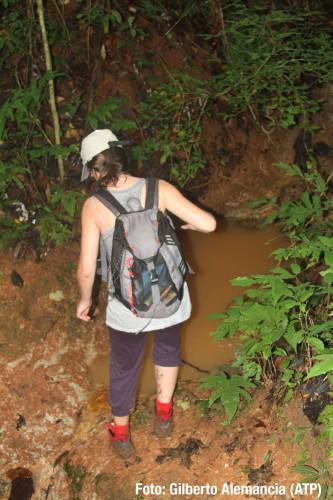 Consecuencias de buscar al águila harpía por la selva en temporada de lluvias